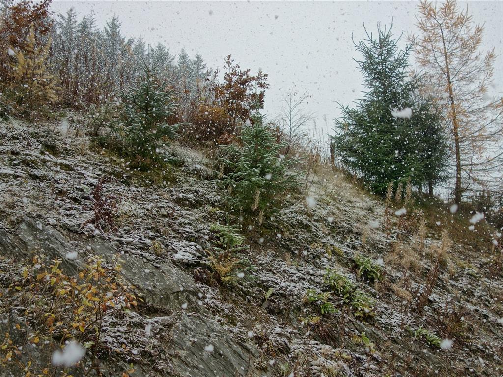 snowy  (Medium)