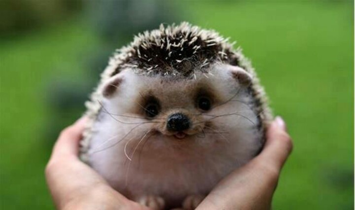 ^ smiling hedgehog, thanks to pinterest ^