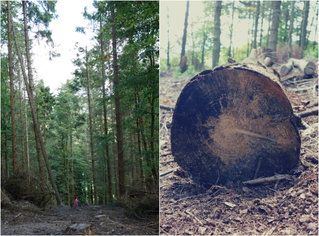 woods 2collage